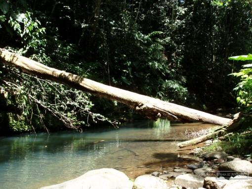 Bassin rivière six bras du fort GOYAVE GUADELOUPE