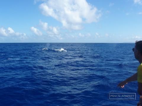 guadeloupe, petite terre, plage, réserve, requin, baleine, ocean, phare, atlantique
