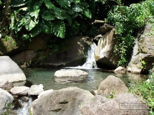 guadeloupe, dole, bain des amours, original, bassin, naturel, cascade, volcan