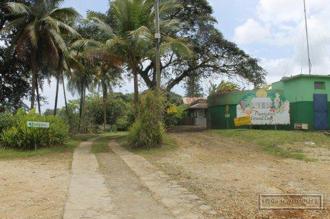 banane, guadeloupe, capesterre, plantation, grand cafe