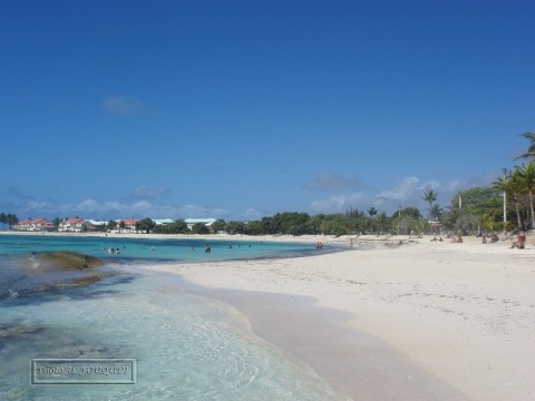 saint francois, guadeloupe, beach, raisins clairs, sand