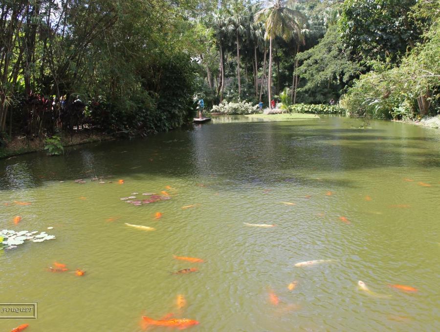 guadeloupe, deshaies, botanical garden, coluche