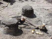 iguana, petite terre, guadeloupe