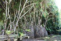 goyave, guadeloupe, blonzac,water garden