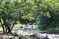 goyave, guadeloupe, blonzac, jardin d'eau
