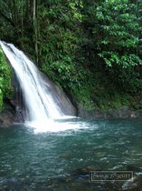 cascade ecrevisses, guadeloupe, petit bourg, basse terre, traversee