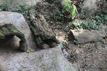 zoo, mamelles, guadeloupe, mongoose, parc des mamelles