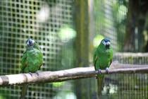 zoo, mamelles, guadeloupe, parrots, ara, parc des mamelles