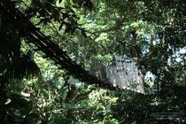 zoo, guadeloupe, mamelles, canopy, parc des mamelles