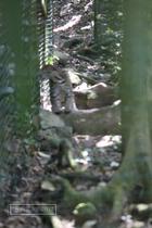 zoo, guadeloupe, mamelles, ocelot, parc des mamelles