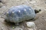 zoo, guadeloupe, mamelles, turtle, parc des mamelles