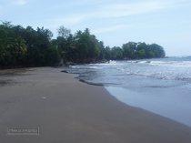 guadeloupe, capesterre, bananier, plage, sable noir, surf
